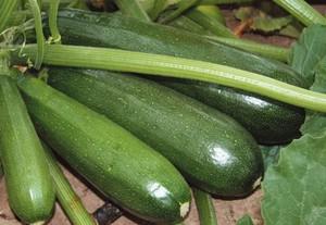 Самые урожайные сорта кабачков