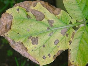 Болезни домашних растений