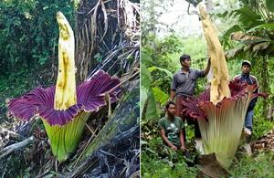 Название, описание и условия выращивания экзотических цветов