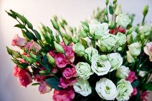 цветы с фото и названиями для букетов