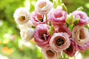 Цветок название