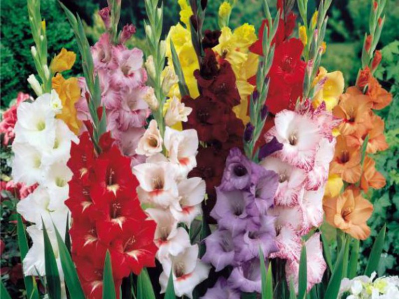 Цветы виды