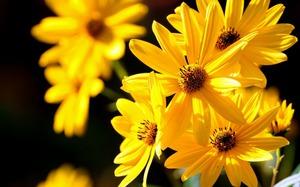К чему жёлтые цветы