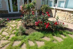 Как создать розарий своими руками выбор места на даче и сорта роз, подготовка участка и фото дизайна