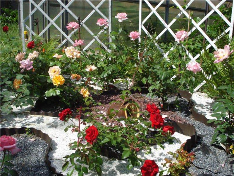 Как выбрать метсо для розария