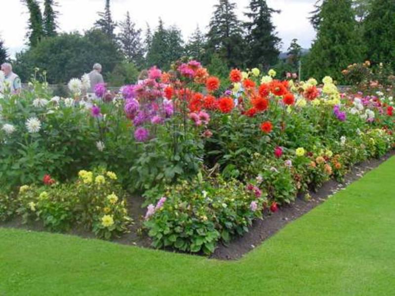 какие цветы можно посадить с розами фото них