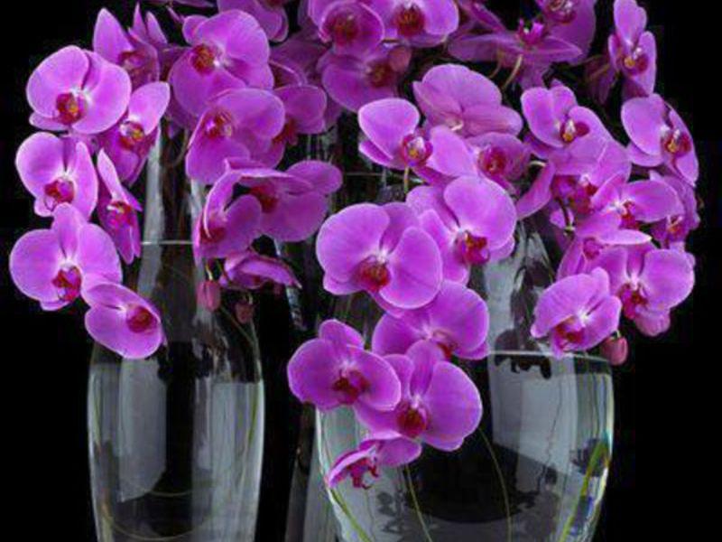 Орхидеи фото цветов в горшках с названиями