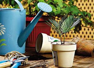 Удобрения для цветущих домашних условиях