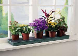 какие органические удобрения для комнатных растений