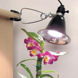 Советы для устройства освещения для Фаленопсиса