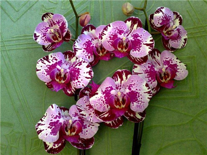 Орхидея и правила ухода за ней
