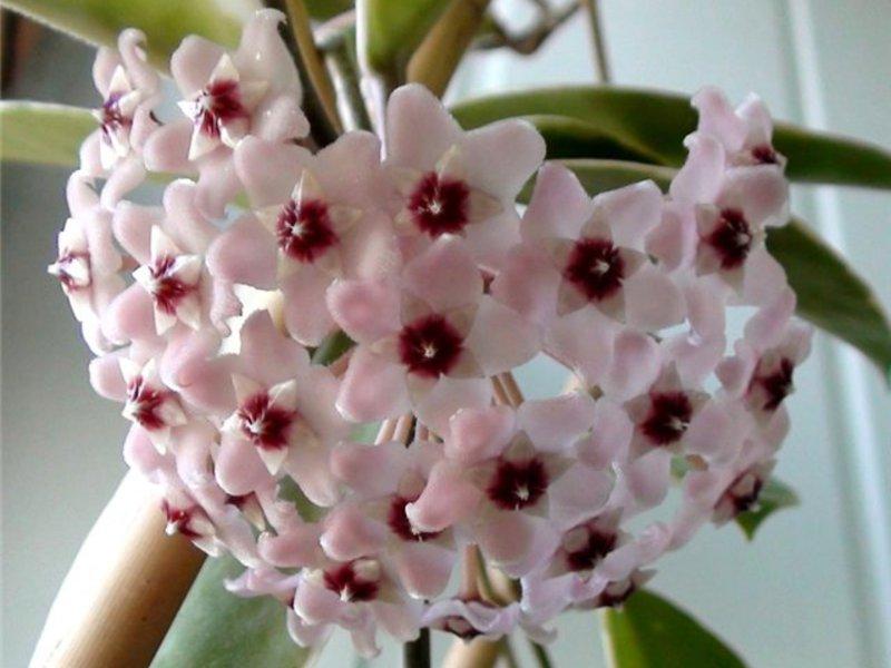 Красиво цветущий цветок