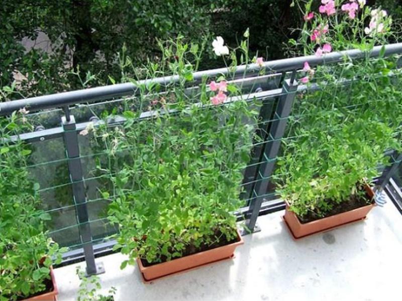 Цветы для открытых балконов