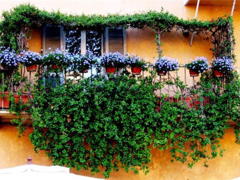 Цветы на балконе: их сорта и названия, как вырастить цветы н.