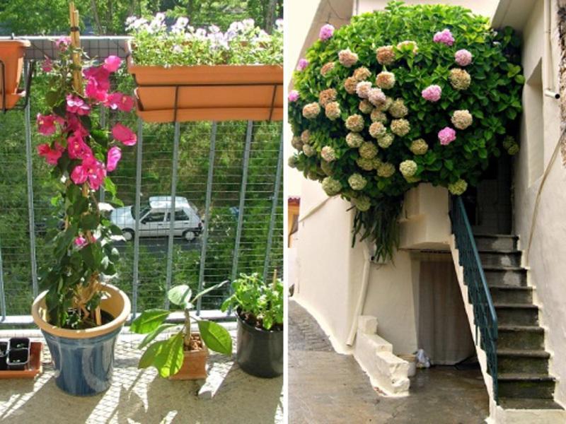 Замечательные цветы в оформлении балкона