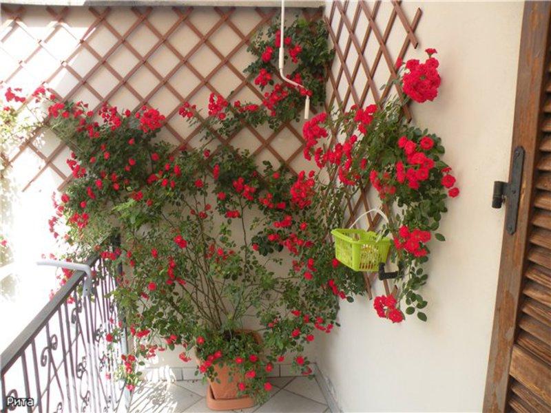 аксессуары цветы на балкон несолнечная сторона это