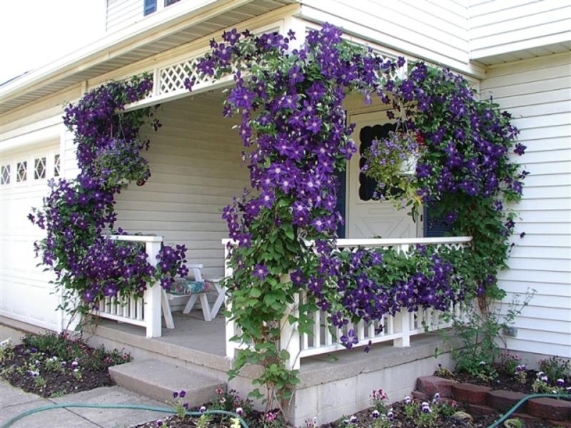 Цветочные горшки на балконе