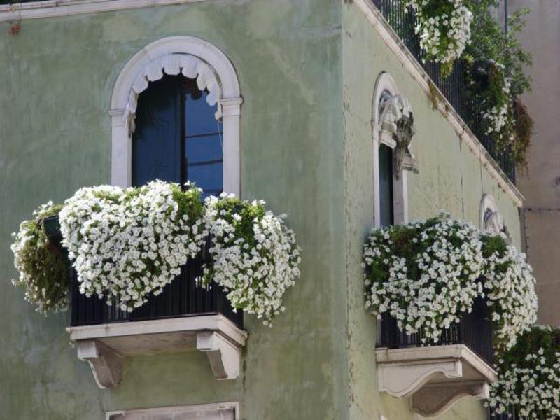 Композиции из цветов на балконе