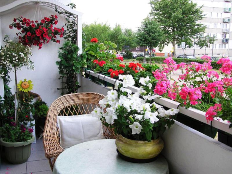 Цветущие растения для балконов