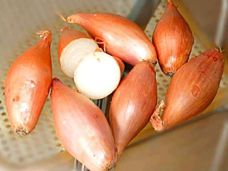 Лук-сорокозубка выращивание 23