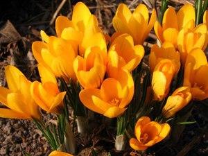 Названия комнатных цветов, каталог комнатных цветов 42