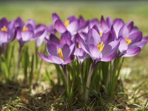 Садовые луковичные цветы фото, названия растений, особенности выращивания и уход