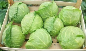 Какие бывают хорошие сорта поздней белокочанной капусты советы по посадке и уходу