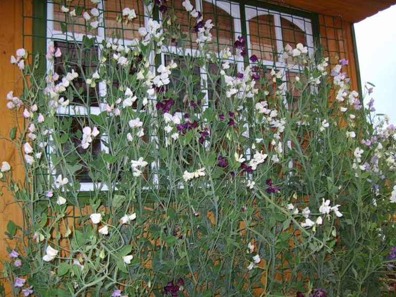 Теневыносливые цветы