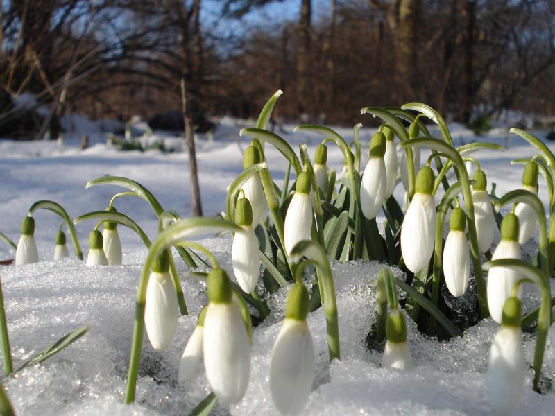 Ранние весенние цветы фото и названия