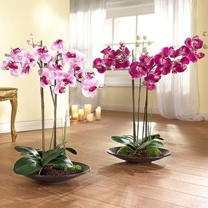 Как пересаживать цветущую орхидею в домашних условиях 478