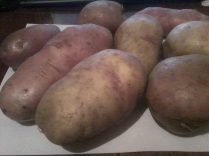картошка романо описание сорта