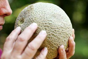 Что это такое дыня канталупа (cantaloupe) происхождение дыни, её полезные свойства и способы