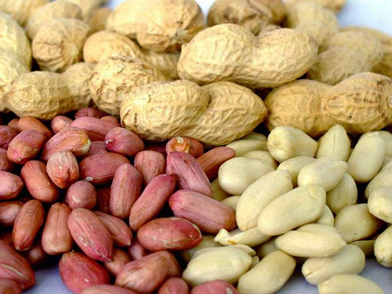 Как подготовить землю ко посадке арахиса