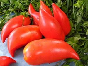 Какие сорта томатов самые лучшие