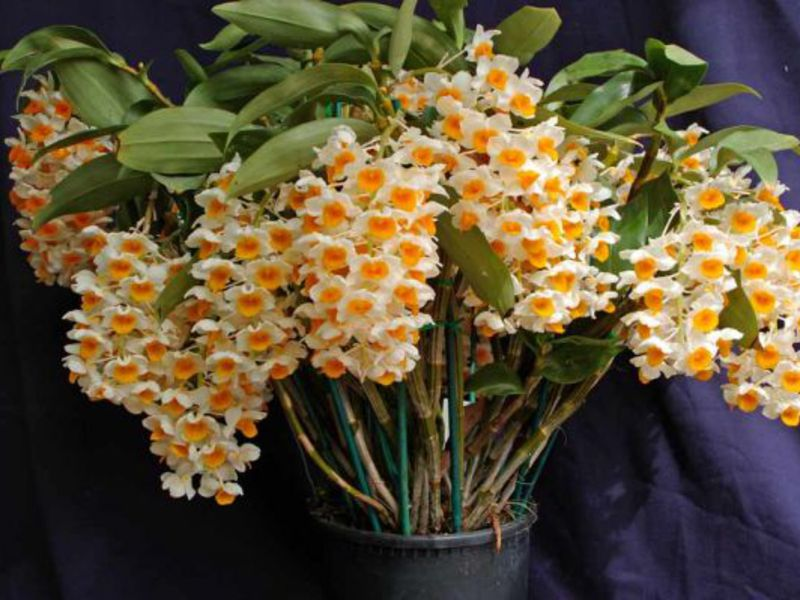 Во что упаковать цветы в домашних условиях