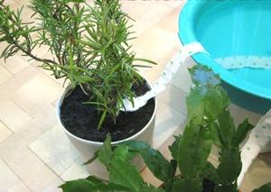 Как сделать автополив растениям