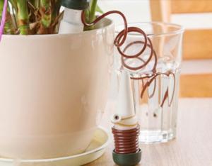 Различные способы полива комнатных растений.