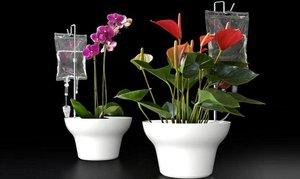 Как сделать систему полива растений