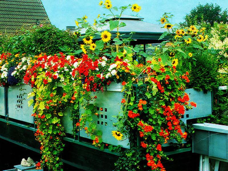 Цветы на балконе - запись пользователя наталья (polyushka-pl.