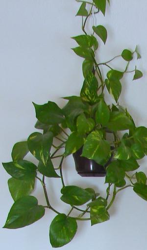 растения для дома приметы