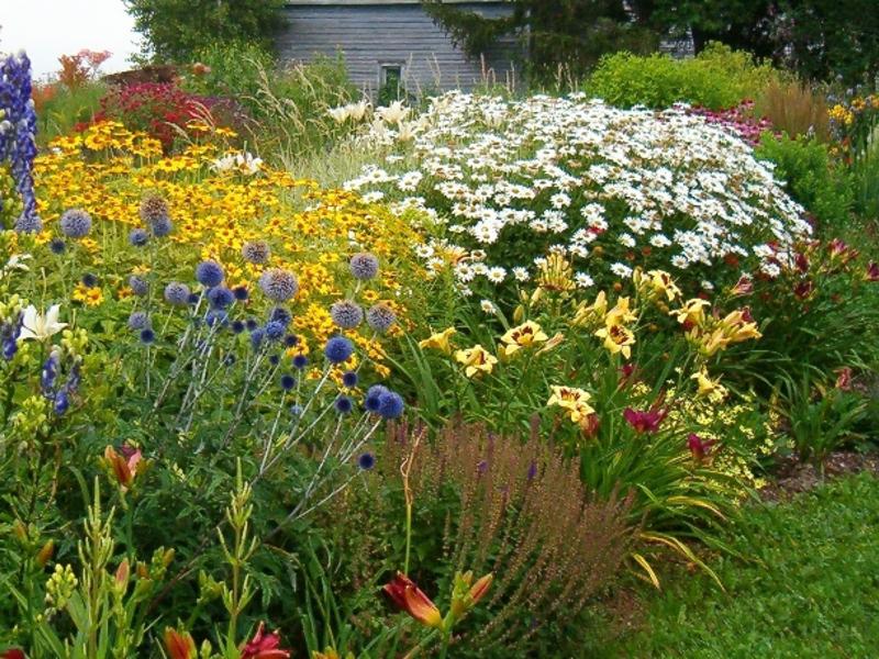 Многолетние цветы для клумбы с