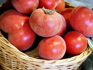 Разновидности сортов томатов для Ленинградской области, критерии выбора