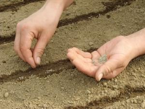 Какие виды размножения существуют у однолетних растений способы размножения, выращивание, посев