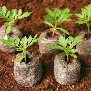 Как сажать семена в торфяные таблетки правила пользования, посев и выращивание рассады в таблетках