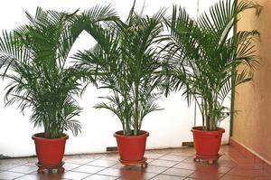 for Plantas de interior que no necesitan luz