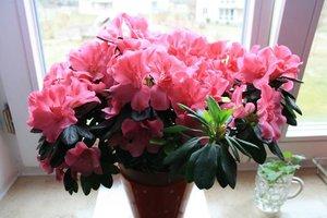 камея фото цветы