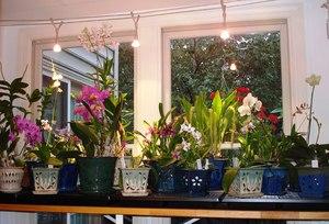 Как правильно ухаживать за орхидеями дома уход за цветами в домашних условиях, советы и виды в