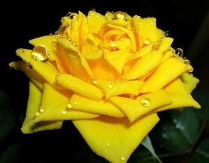 Можно ли дарить жёлтые цветы