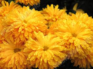 Чего означают желтые цветы в подарок