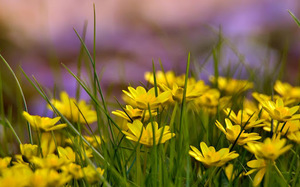 Цветы картинка желтые